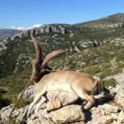 Cazar ibex Ronda